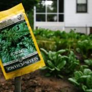 5 Alternatives to Building an Outdoor Garden