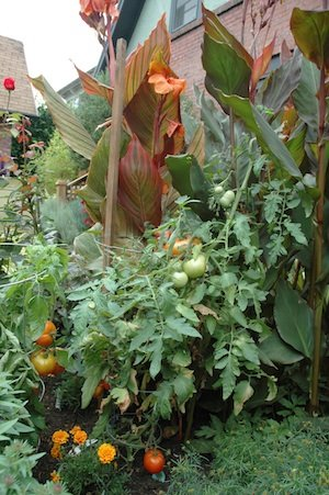 mix vegetables with ornamental plantings