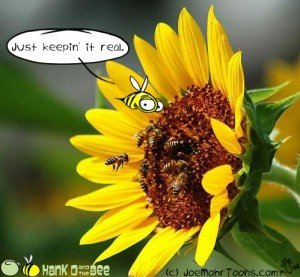 Hank D and the Bee: Bee keeping…
