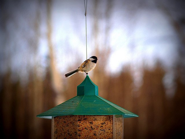 bird on birdfeeder