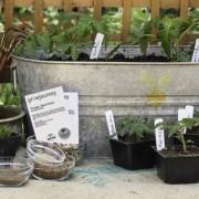 Seed Subscription Club Focuses on Organically-Grown Heirloom Seeds