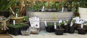 growjourney-Potting-Bench