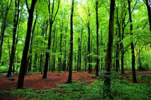 green-forest-trees