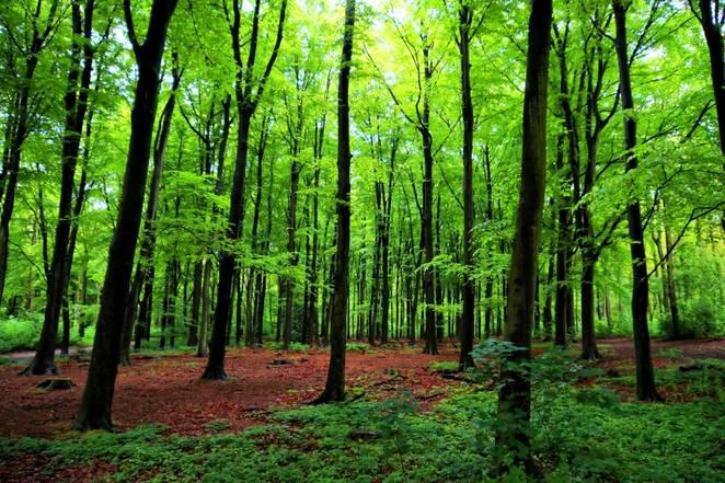 Forest communication: Trees talk via mycelium