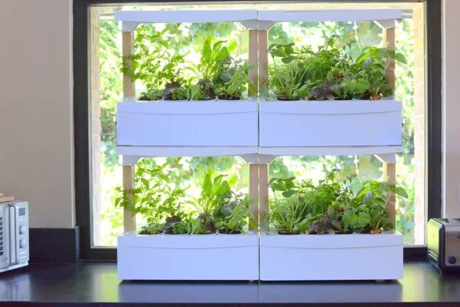 Countertop Growing Units Offer Promise Of Easy Indoor Gardening