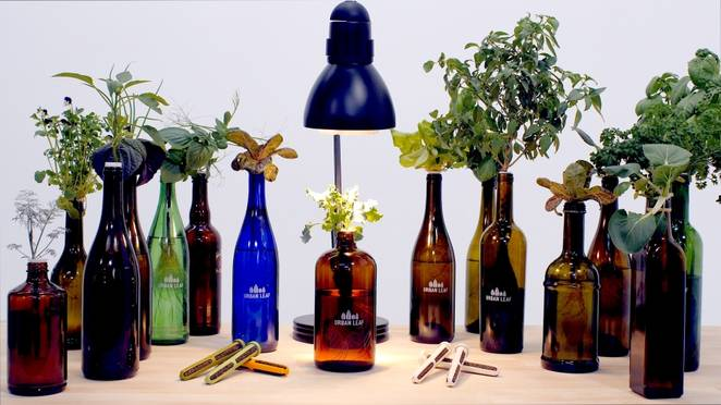 Urban Leaf converts a glass bottle into the world's smallest garden