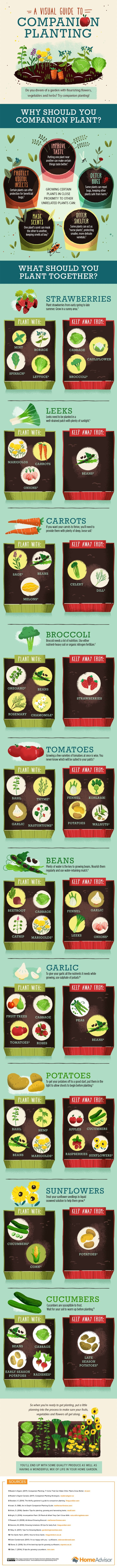 companion planting: a visual guide