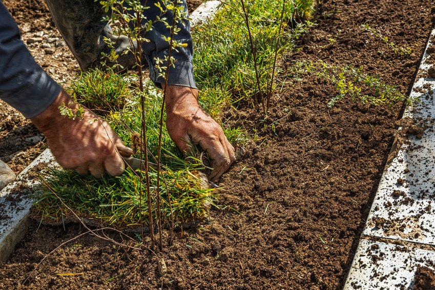 3 Key Things To Consider Before Starting a Landscaping Project