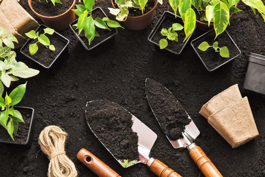 Want To Introduce Your Child To The Joys Of Gardening? Here Are 3 Of The  Easiest Plants To Grow