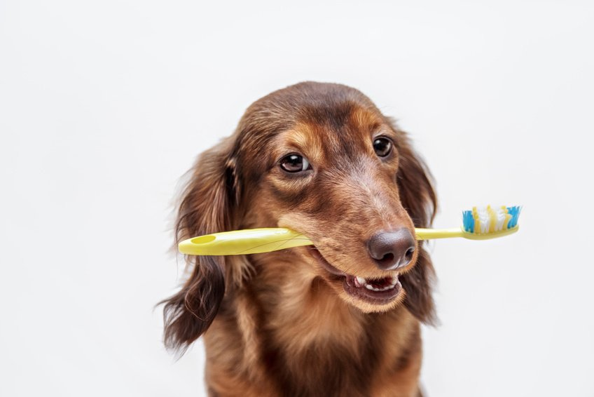 Adopting an Irish Setter? Here's What You Should Know About Proper Care